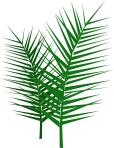 Leafy-Palm-Branches